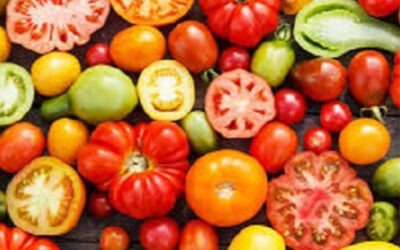 What tomatoes teach us about pain